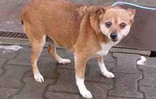 huendin04-funa-6jahre-aufnahmepatenschaft Neun Hunde aus einem polnischen Tierheim suchen Aufnahmepaten