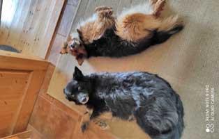hund-Janosch-zuhause-gefunden-neu Vermittlungstier