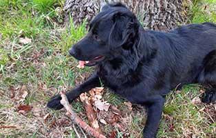hund-gabi-zuhause-gefunden Vermittlungstier