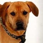 hund-vito-verstorben-02-150x150 Vito – unser kleiner Autist