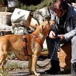 hund-vito-verstorben-03-150x150 Vito – unser kleiner Autist