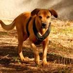 hund-vito-verstorben-04-150x150 Vito – unser kleiner Autist