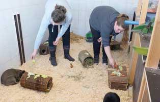 jahresbericht-wollaberg-2019-kleintierhaus Jahresbericht Tierheim Wollaberg 2019