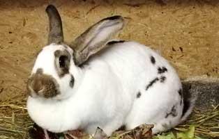 kaninchen-bella-futterpatenschaft-april 3-monatige Futterpatenschaft übernehmen