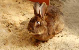 kaninchen-klopfer-futterpatenschaft-april 3-monatige Futterpatenschaft übernehmen