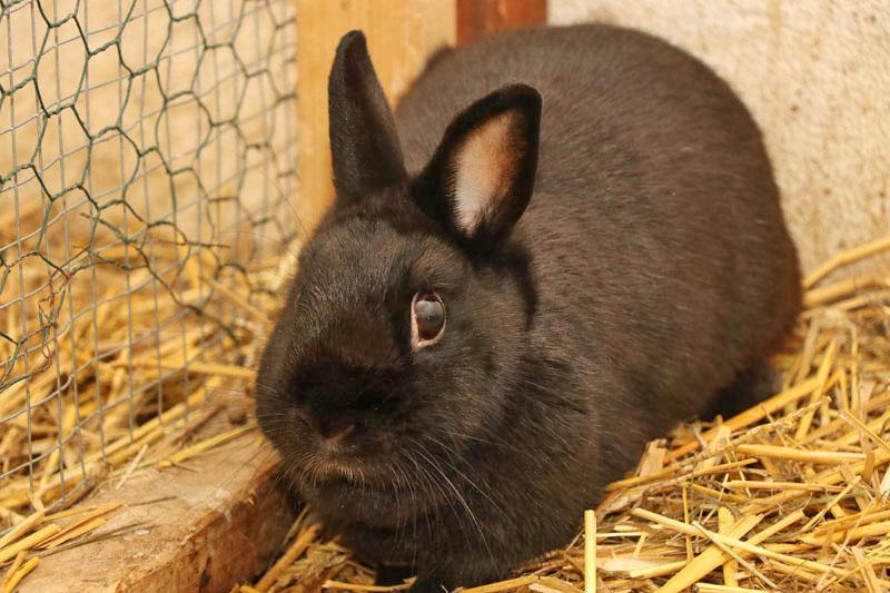 kaninchen-ping-zuhause-gesucht1 BB RADIO - 4 Wände für 4 Pfoten!