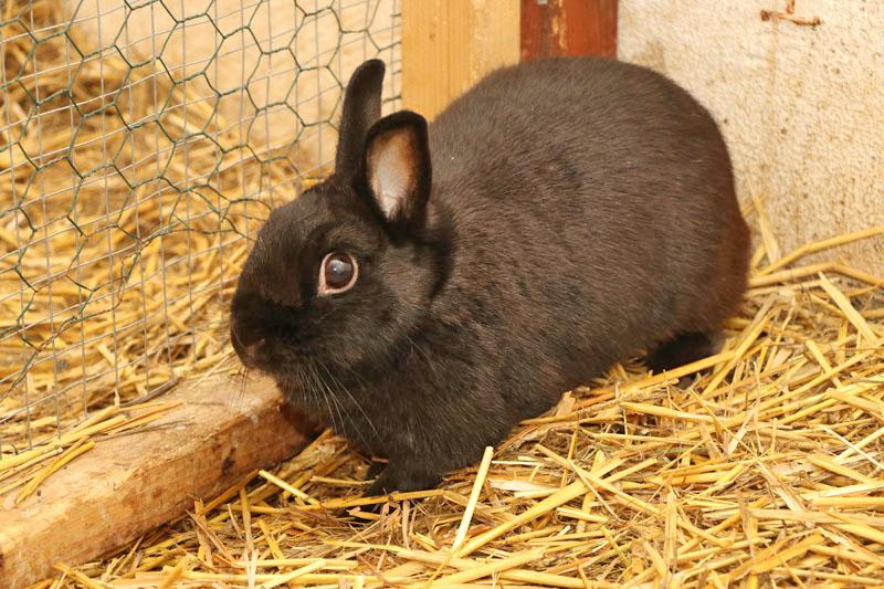 kaninchen-ping-zuhause-gesucht2 BB RADIO - 4 Wände für 4 Pfoten!
