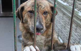 ruede01-2jahre-aufnahmepatenschaft Neun Hunde aus einem polnischen Tierheim suchen Aufnahmepaten