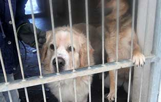 ruede02-glen-aufnahmepatenschaft Neun Hunde aus einem polnischen Tierheim suchen Aufnahmepaten