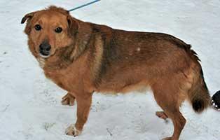 ruede04-jubel-10jahre-aufnahmepatenschaft Neun Hunde aus einem polnischen Tierheim suchen Aufnahmepaten