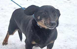 ruede05-jacky-7jahre-aufnahmepatenschaft Neun Hunde aus einem polnischen Tierheim suchen Aufnahmepaten
