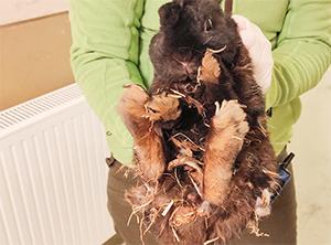 strohiges-kaninchen Ein Kleintierhaus für das Tierheim Bückeburg