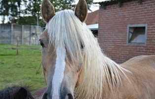 tierratgeber-pferde-arthrose-pferd Arthrose beim Pferd