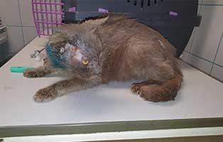 ungarn-kater-kazmer-verletzt Neun Hunde aus einem polnischen Tierheim suchen Aufnahmepaten