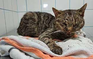 ungarn-katze-unfall-schlechter-zustand Neun Hunde aus einem polnischen Tierheim suchen Aufnahmepaten
