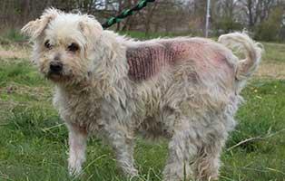 hund-cuki-weiblich-6-Monate Neun Hunde aus dem Tierheim Békéscsaba suchen Aufnahmepaten