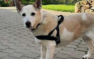 hund-evi-zuhause-gefunden-draussen Vermittlungstier
