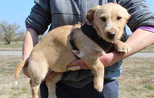 hund-heinrich-maennlich-6-Monate Neun Hunde aus dem Tierheim Békéscsaba suchen Aufnahmepaten