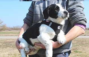 hund-heinz-maennlich-6-Monate Neun Hunde aus dem Tierheim Békéscsaba suchen Aufnahmepaten