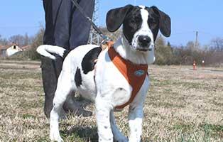hund-helmut-maennlich-6-Monate Bogárs und Tücsök - zwei Hund in Not