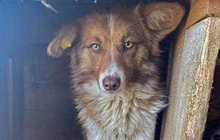 hund-mialo-rumaenien-aufnahmepatenschaft Vier Hunde aus rumänischen Sheltern und Tötungsstationen suchen Aufnahmepaten