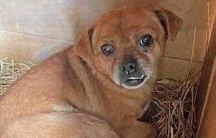hund-siggy-rumaenien-aufnahmepatenschaft Vier Hunde aus rumänischen Sheltern und Tötungsstationen suchen Aufnahmepaten