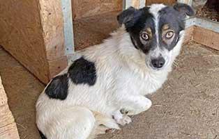 hund-spiky-rumaenien-aufnahmepatenschaft Vier Hunde aus rumänischen Sheltern und Tötungsstationen suchen Aufnahmepaten