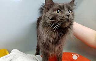 katze04-blue-rettungspaten 10 verwahrloste Katzen suchen Rettungspaten