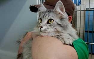 katze05-jewel-rettungspaten 10 verwahrloste Katzen suchen Rettungspaten