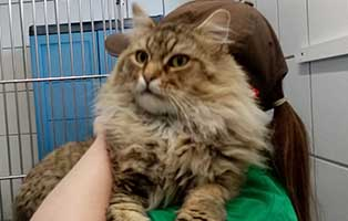 katze06-loewenherz-rettungspaten 10 verwahrloste Katzen suchen Rettungspaten