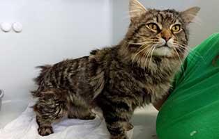katze07-luke-rettungspaten 10 verwahrloste Katzen suchen Rettungspaten