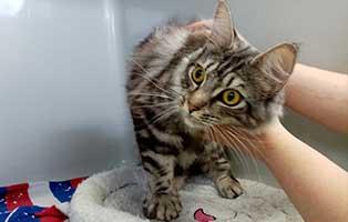 katze08-madita-rettungspaten 10 verwahrloste Katzen suchen Rettungspaten