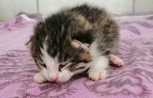 katzenbaby-wk047-21-maennlich-start-ins-leben Vier Katzenbabys aus dem Tierheim Wollaberg suchen Start-ins-Leben Paten