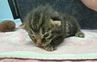 katzenbaby07-weiblich-bk046-21 10 Kitten aus dem Tierschutzliga-Dorf suchen Start-ins-Leben Paten