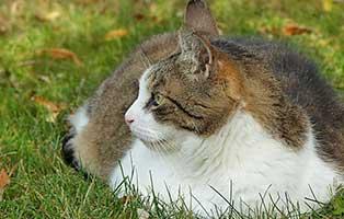 kuehnemund-blog-diabetis-katzen Kompetente Tierarztberatung bei Fragen rund um Dein Tier