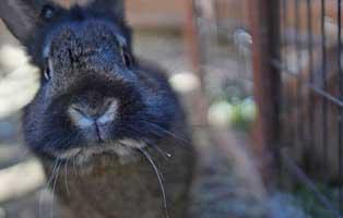 kuehnemund-blog-kaninchenschnupfenjpg Kompetente Tierarztberatung bei Fragen rund um Dein Tier