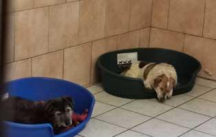 merlin-nicolai-muede Vier Hunde aus einem polnischen Tierheim suchen Aufnahmepaten