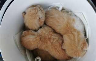 drei-katzenbabys-tierschutzliga-dorf TIERSCHUTZLIGA-Dorf