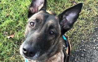 hund-amy-futterpatentier 3-monatige Futterpatenschaft übernehmen