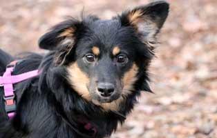 hund-cherin-futterpatentier 3-monatige Futterpatenschaft übernehmen