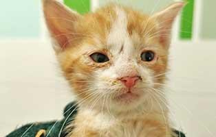 katzenbaby-tk003-21-maennlich Start-ins-Leben-Patenschaft