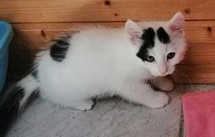 katzenbaby03-wk-054-21-maennlich-wollaberg 10 Katzenbabys aus dem Tierheim Wollaberg suchen Start-ins-Leben Paten