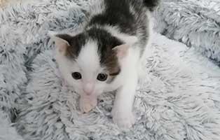 katzenbaby09-wk-090-21-maennlich-wollaberg 10 Katzenbabys aus dem Tierheim Wollaberg suchen Start-ins-Leben Paten
