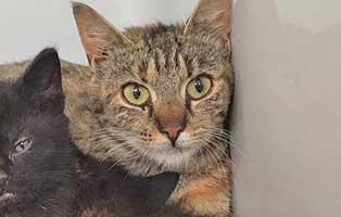 katzenmama-xena-kastration Fünf Katzenbabys aus Bückeburg suchen Start-ins-Leben Paten