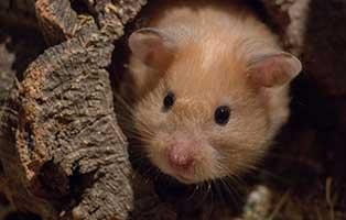 kuehnemund-blog-hamster Kompetente Tierarztberatung bei Fragen rund um Dein Tier