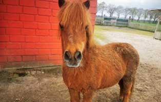 pony-eddy-futterpatentier 3-monatige Futterpatenschaft übernehmen