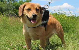 welpe04-weiblich-brenda-ungarn-aufnahmepatenschaft Sechs Junghunde aus dem Tierheim Békéscsaba suchen Aufnahmepaten