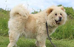 welpe06-weiblich-sao-may-ungarn-aufnahmepatenschaft Sechs Junghunde aus dem Tierheim Békéscsaba suchen Aufnahmepaten