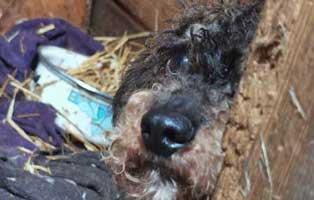 animal-hoarding-traurig Wieder eine Rettung aus quälerischer Haltung – helfen Sie 14 Hunden in höchster Not