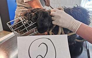 hund-02-dackelhündin-erna Wieder eine Rettung aus quälerischer Haltung – helfen Sie 14 Hunden in höchster Not